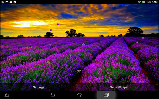 Lavender Live Wallpaper Unduh   Lavender Live Wallpaper 51 Android 512x320