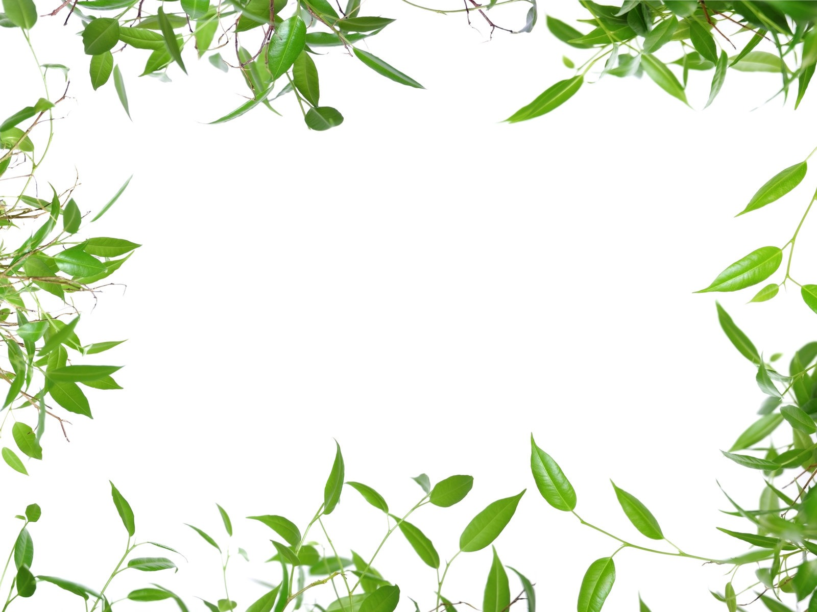 Description leaves border fresh green leaves Current Size 1600 x 1600x1200