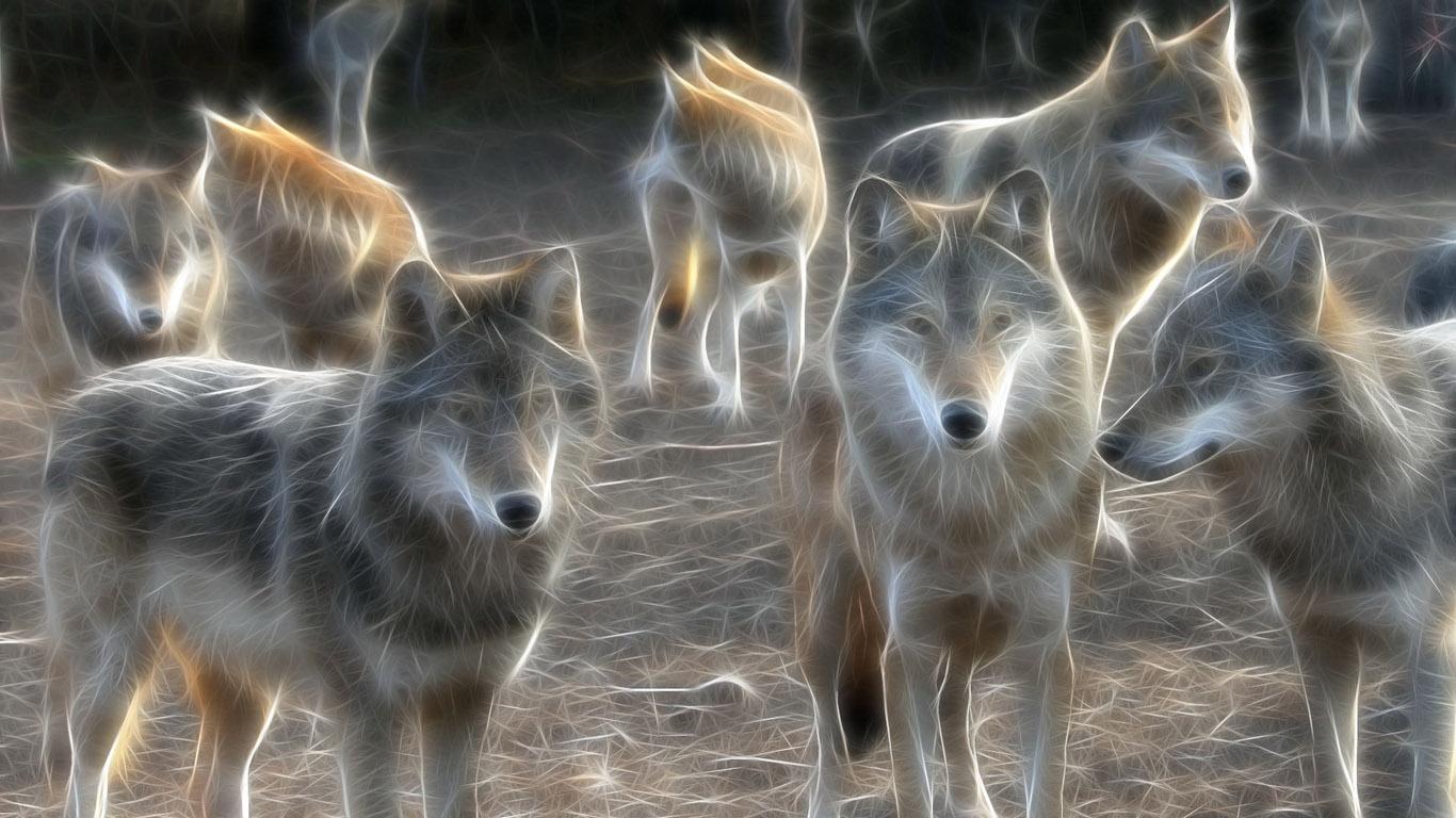 moving wolf wallpapers - wallpapersafari