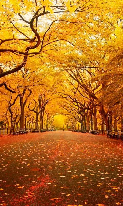 Central Park York Autumn HD Wallpapers Backgrounds Central Park 480x800