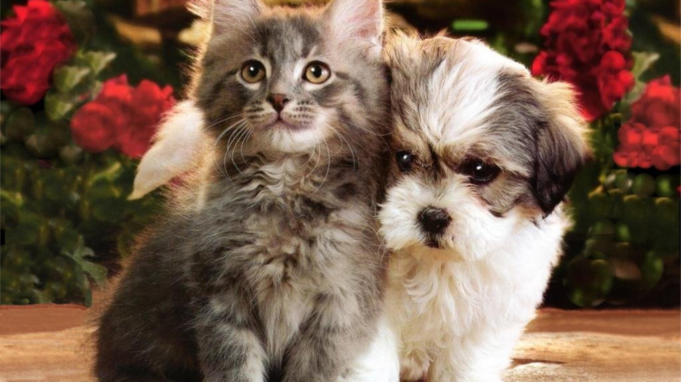 Cats And Dogs Hd Cats Wallpapers Download Wallpapers Of Dogs 1366x768