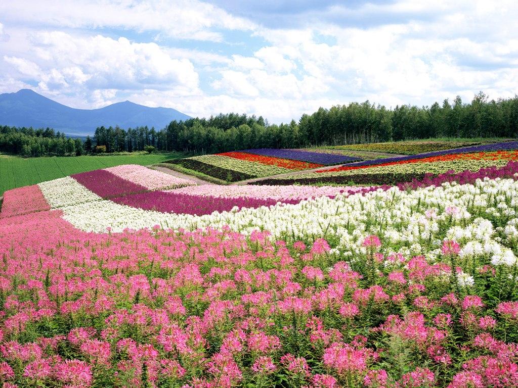 Japan Hokkaido Landscape 1 wallpaper 1024x768