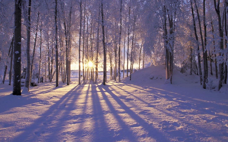 winter trees forest nausicaa alaska shadows scenery sunset 356990 1440x900