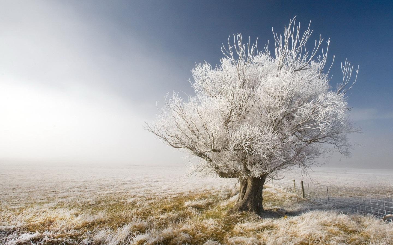1440 early winter wallpaperjpg 1440x900