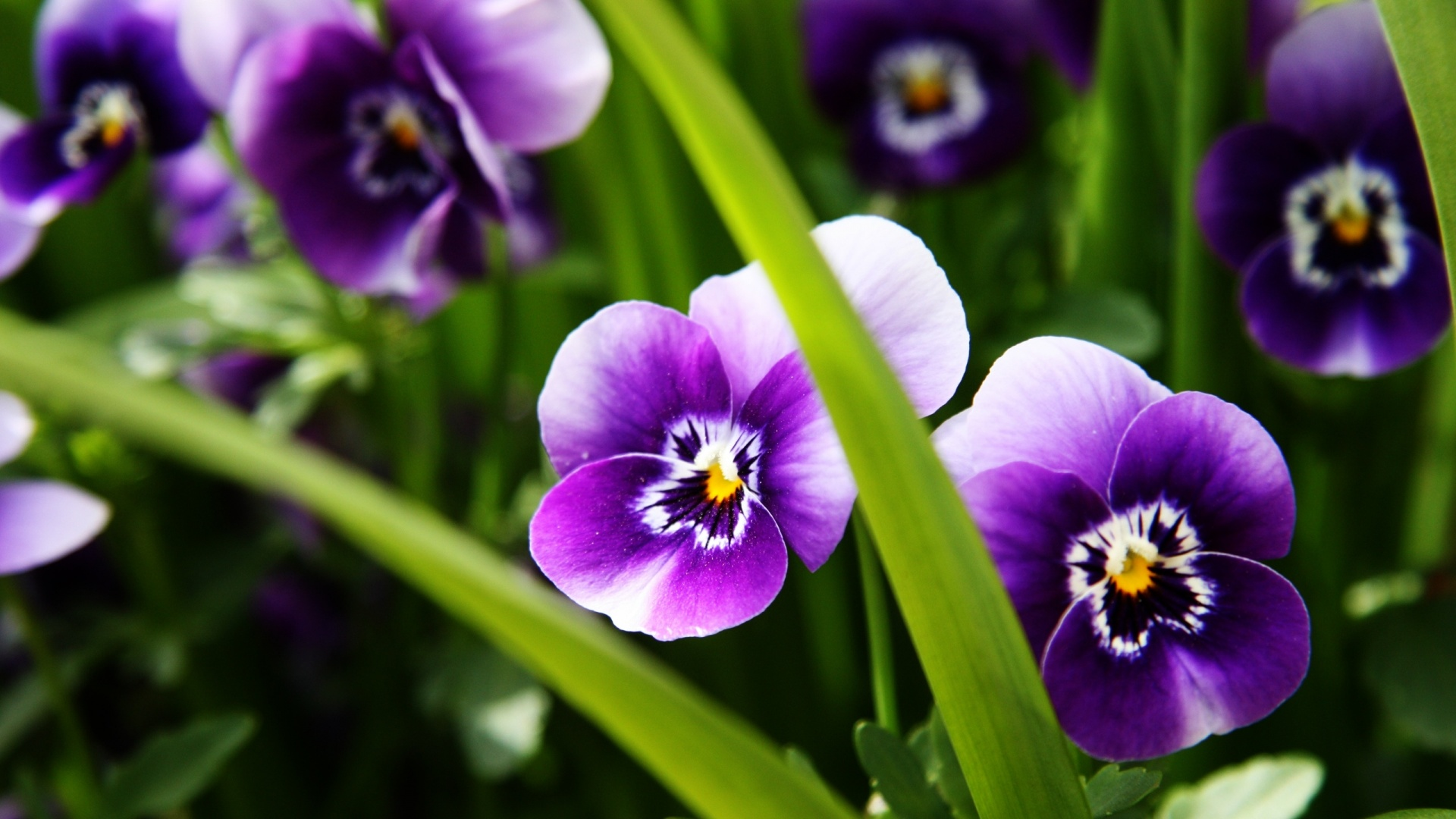 46+ Wallpaper for Desktop Purple Flowers on WallpaperSafari