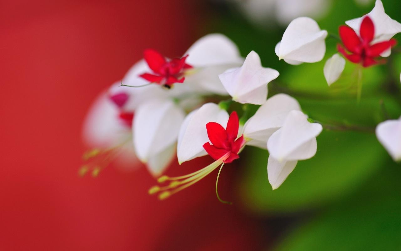 Very Cute Little Flowers Wallpapers   1280x800   183060 1280x800