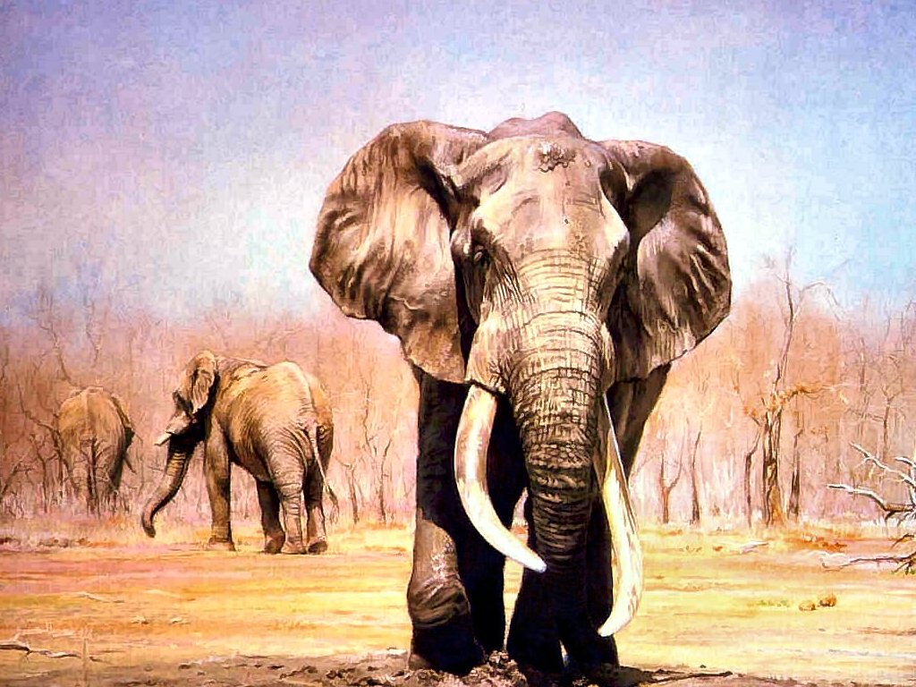 Hd wallpaper elephant - Indian Elephant Pictures 16663 Hd Wallpapers In Animals Imagesci Com
