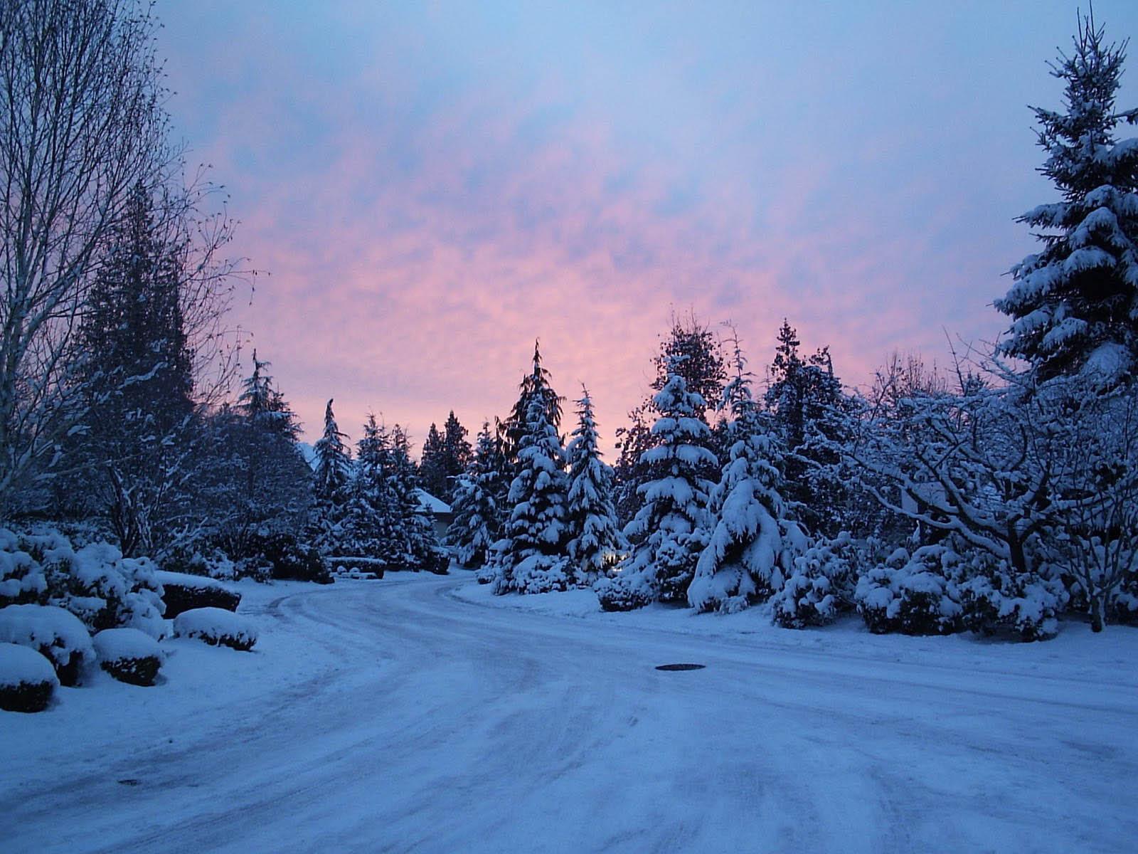 the Winter Backgrounds Winter Wallpapers WinterDesktop Wallpapers 1600x1200