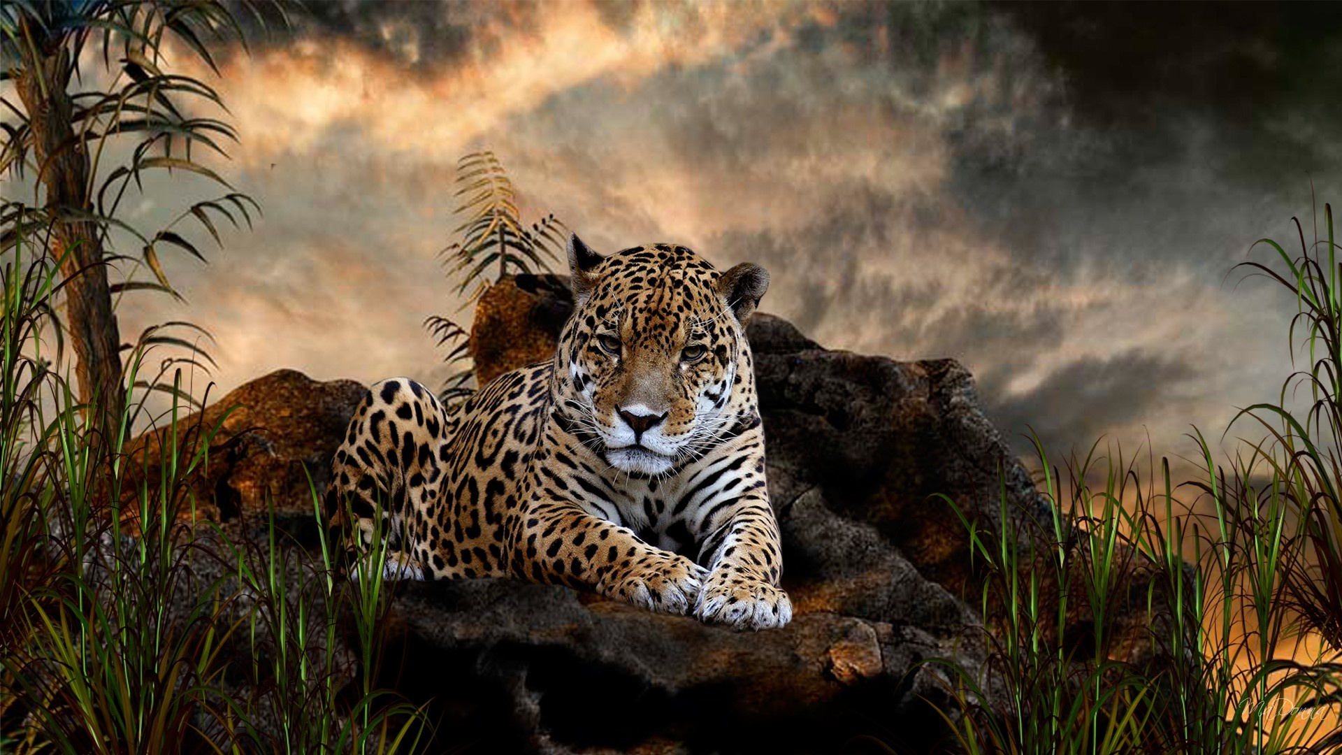 Big Cats   Wild Animals Wallpaper 34365415 1920x1080