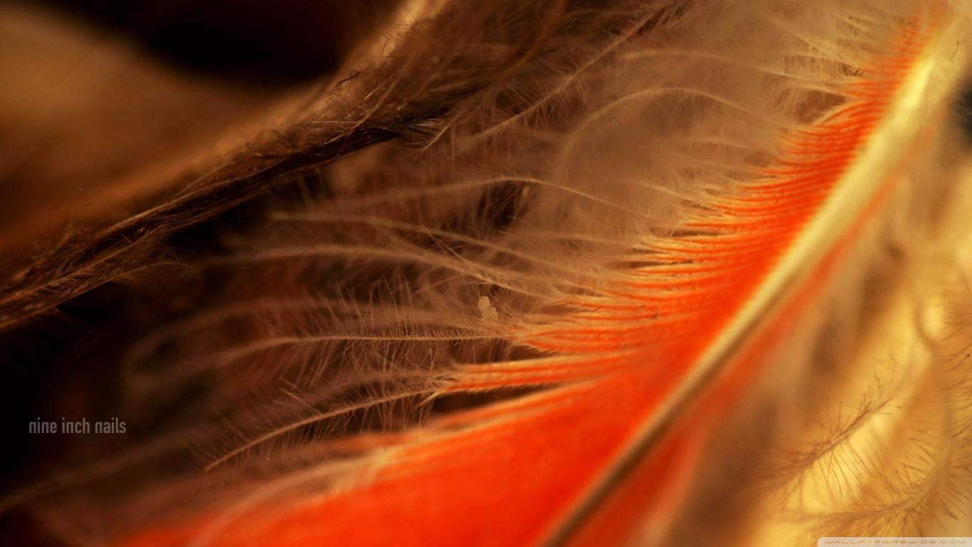Orange Feather Macro 4K HD Desktop Wallpaper for 4K Ultra HD TV 1366x768
