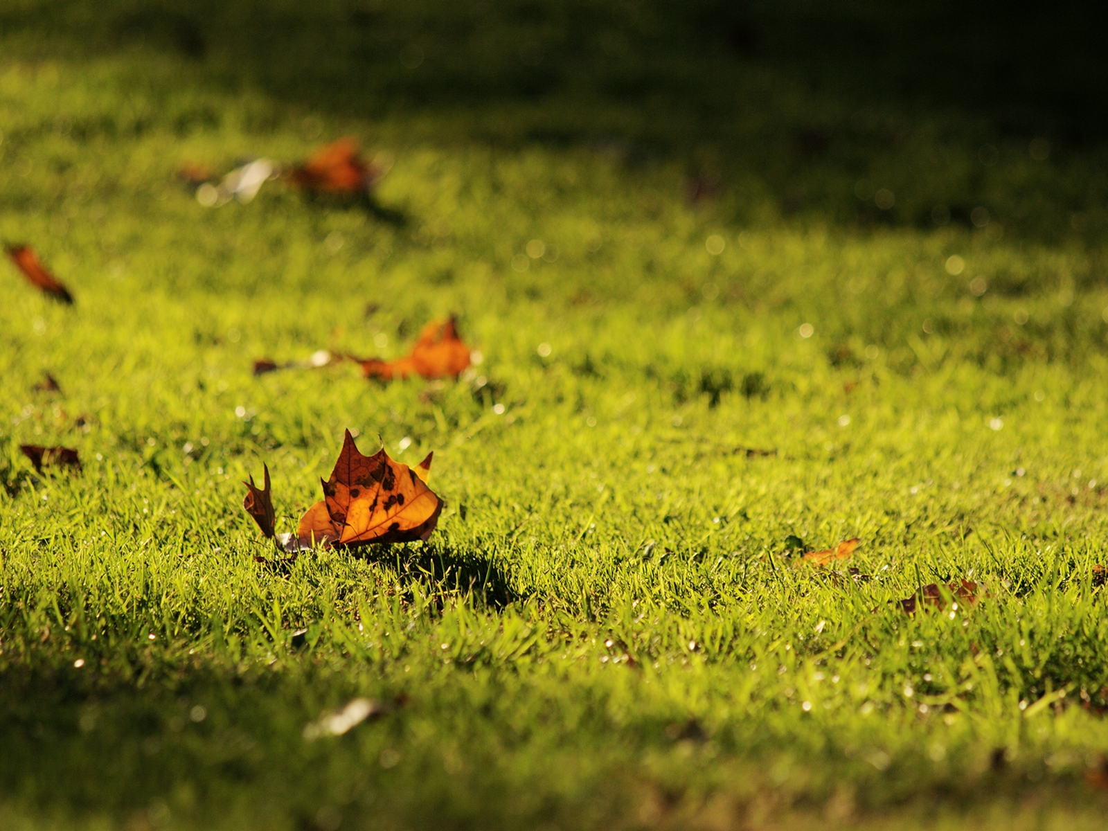 FileSigns of autumn wallpaperjpg   Wikimedia Commons 1600x1200