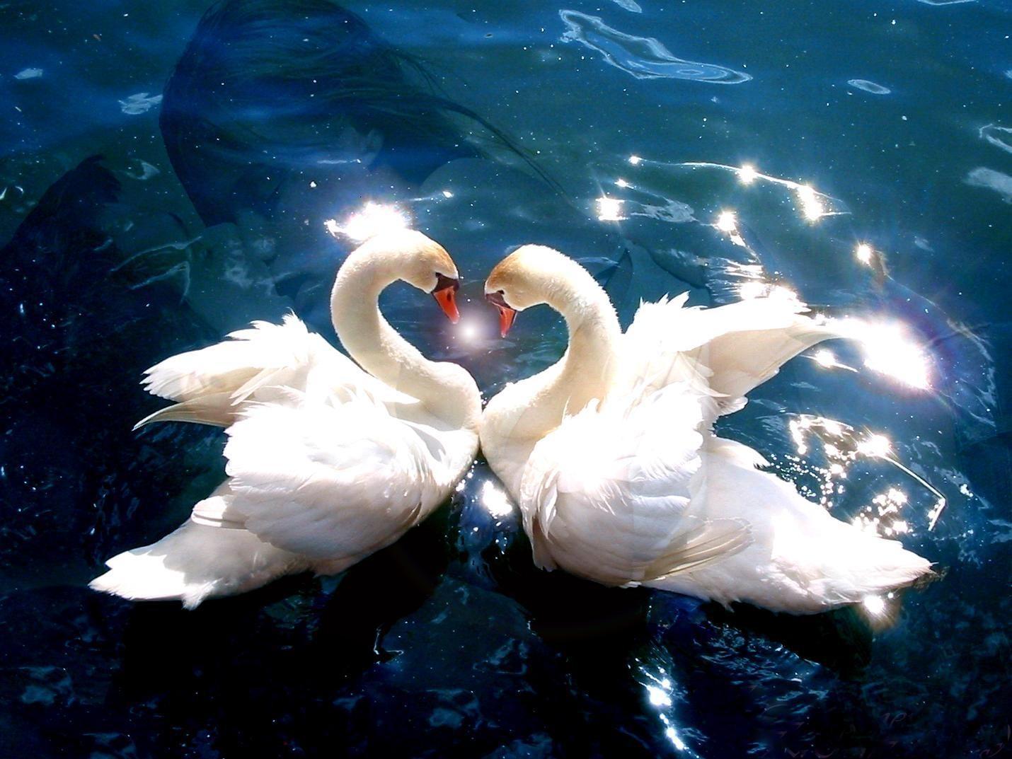 8100 Koleksi Romantic Love Wallpaper Free Download HD
