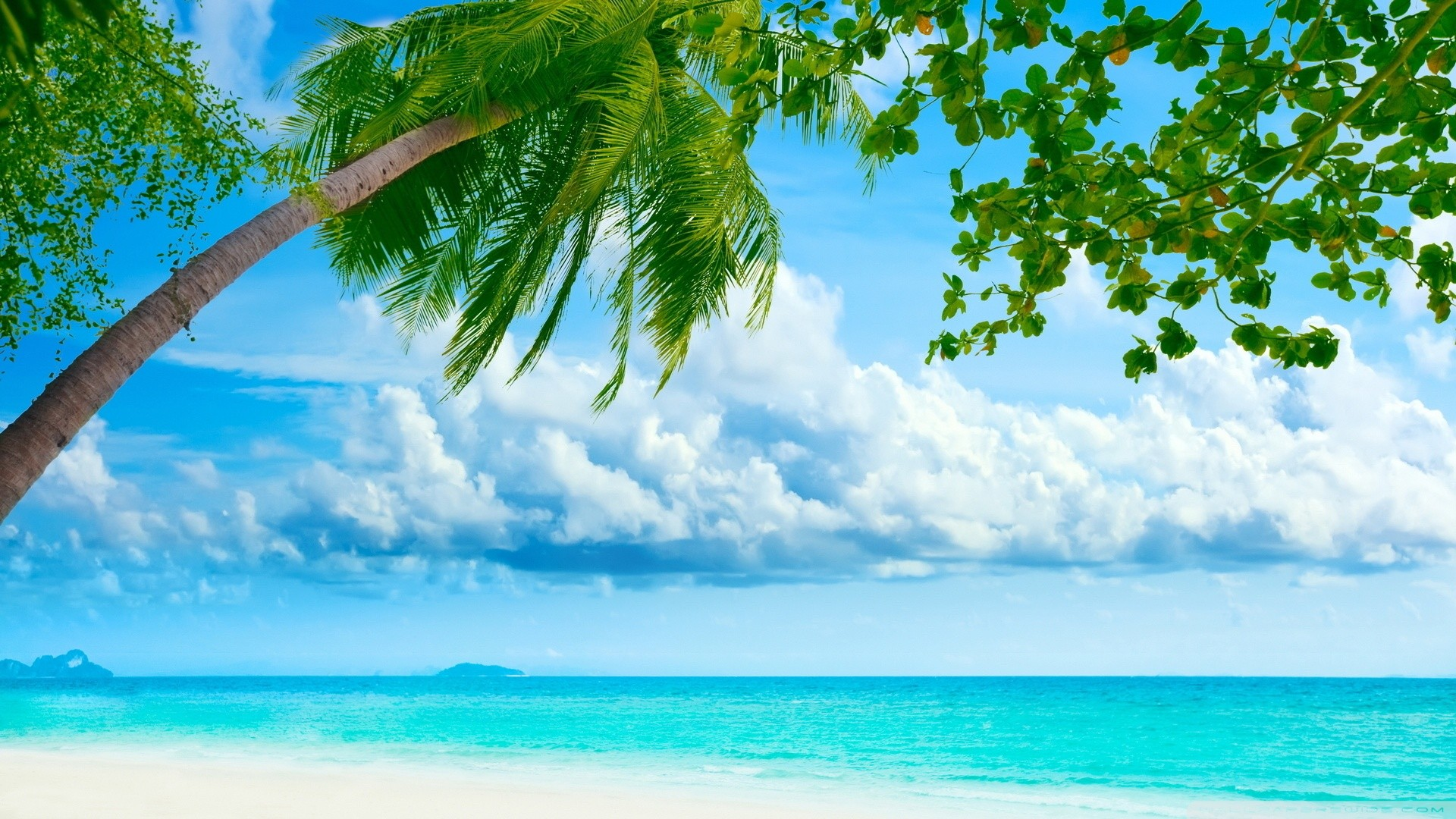 beach tropical hd wallpaper wallpapers55com   Best Wallpapers for 1920x1080