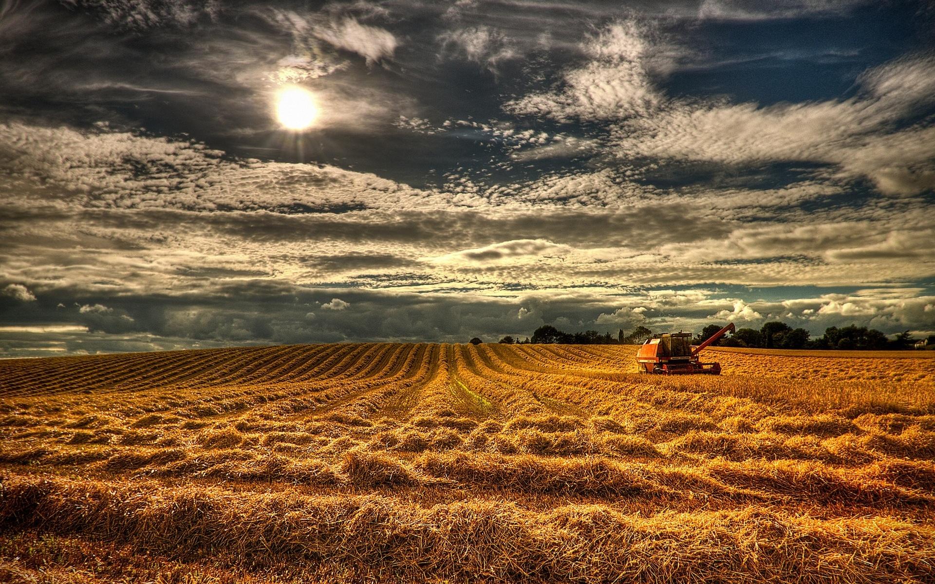 download Northern Ireland England field grain harvest 1920x1200