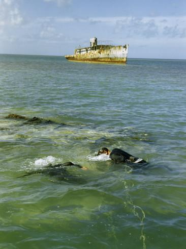 Navy Divers Explore Reefs Anchored Target Ship Sits in 366x488