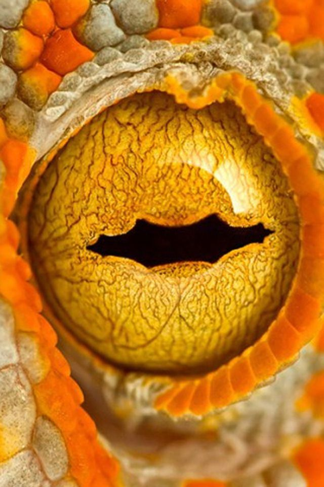 Animal Eyes Close Up Eye Closeup iPhone HD Wallpaper iPhone HD 640x960