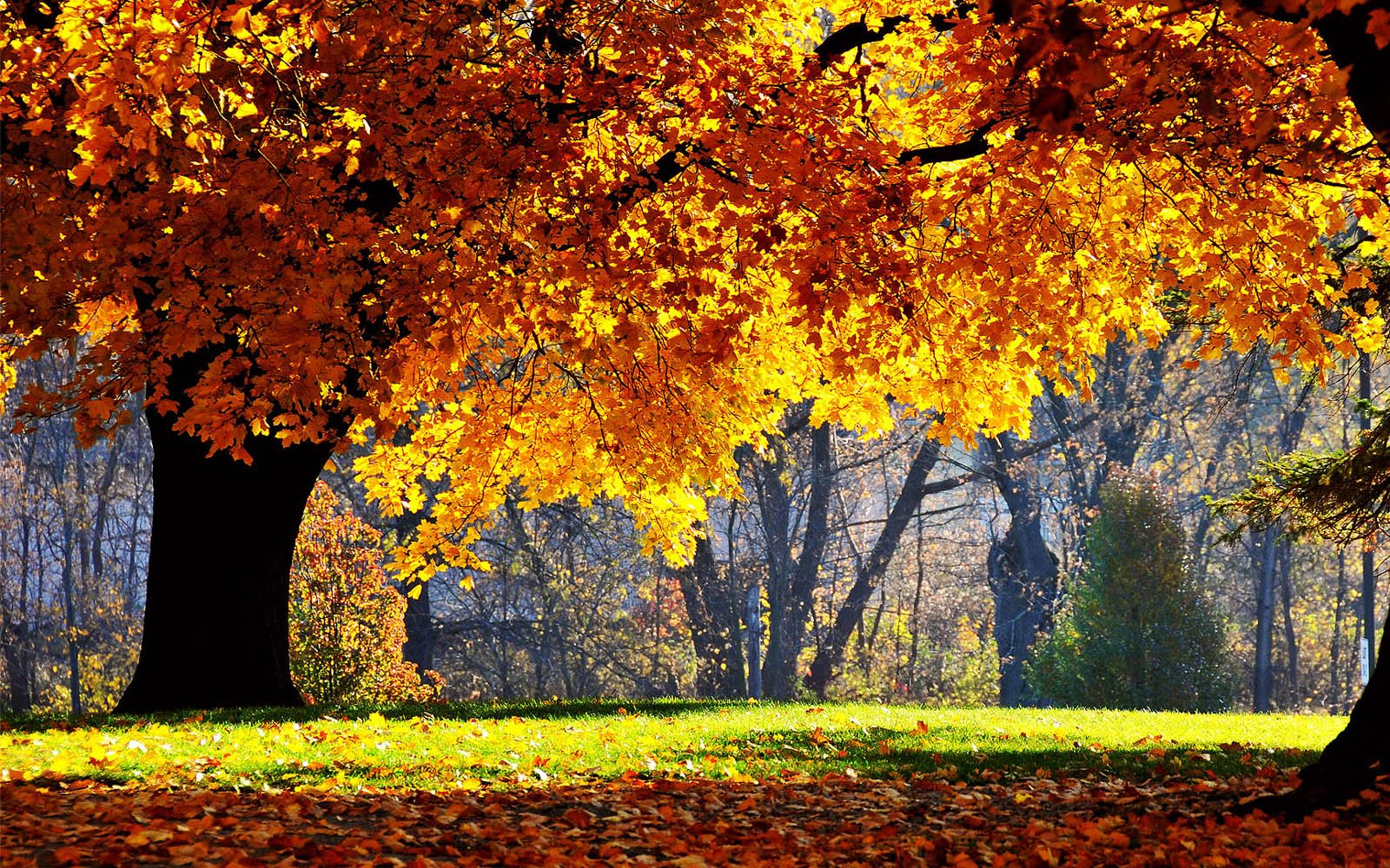 Beautiful Autumn Scenery Wallpapers Desktop 1600x1000