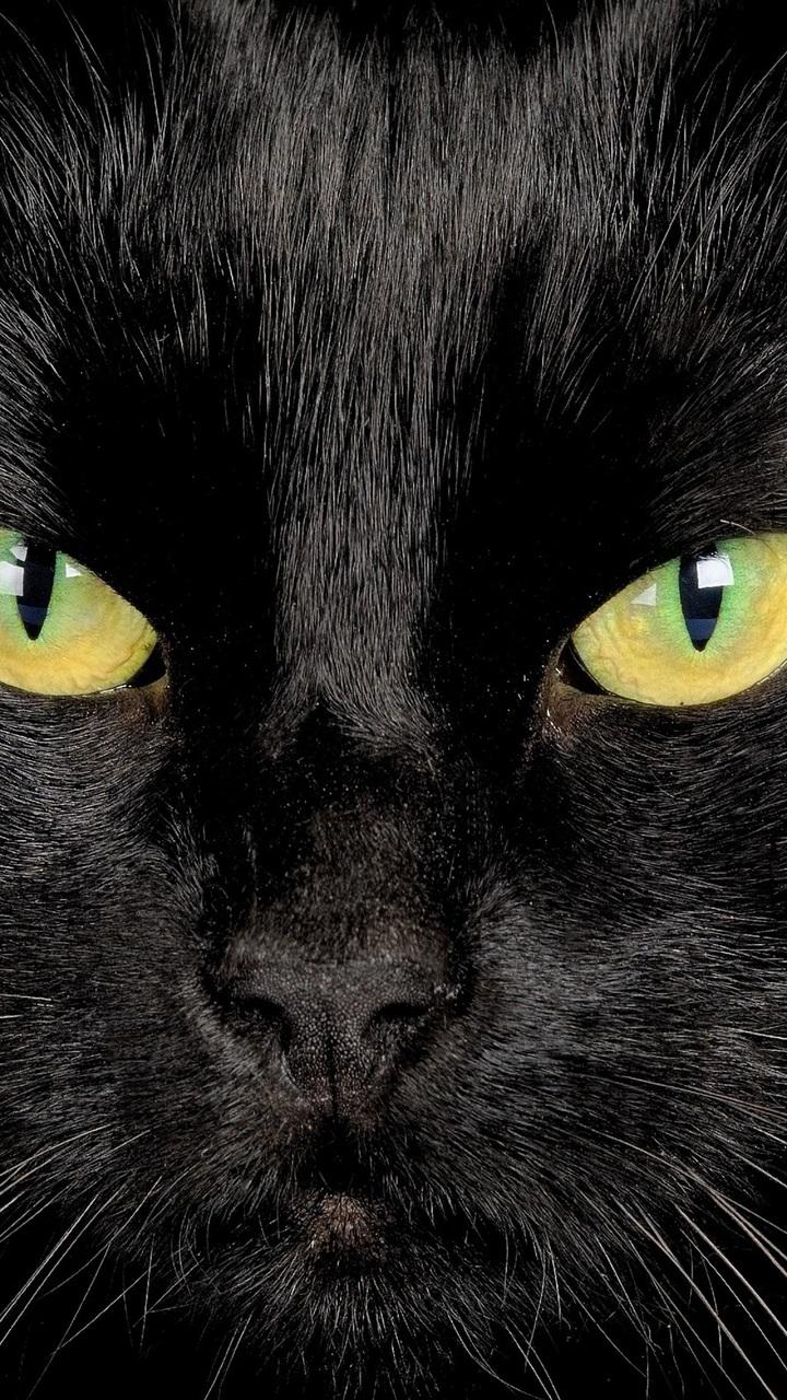 720x1280 black cat view eyes desktop wallpaper 1911 720x1280