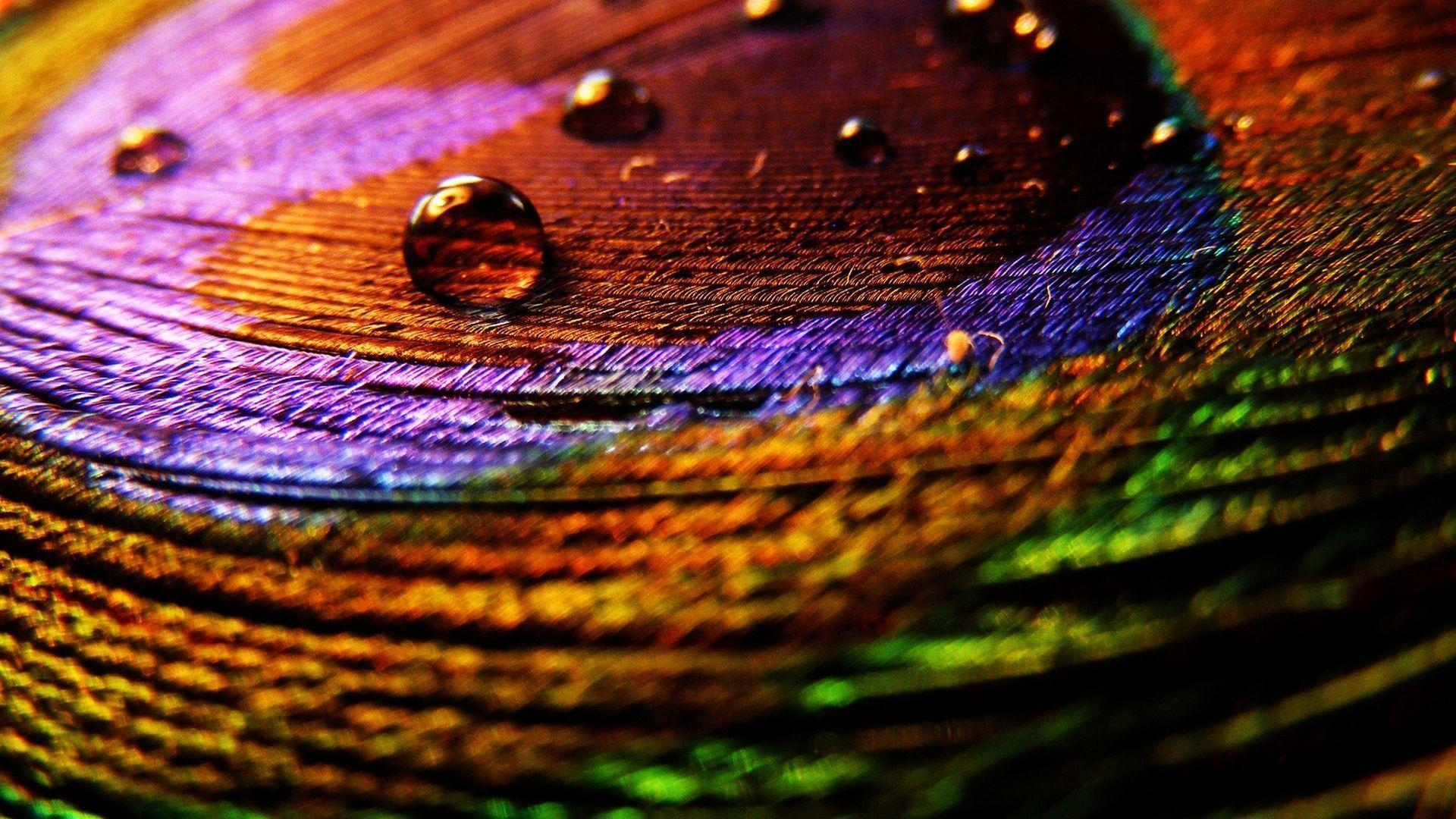 Wallpapers Of Peacock Feathers HD 2015 1920x1080