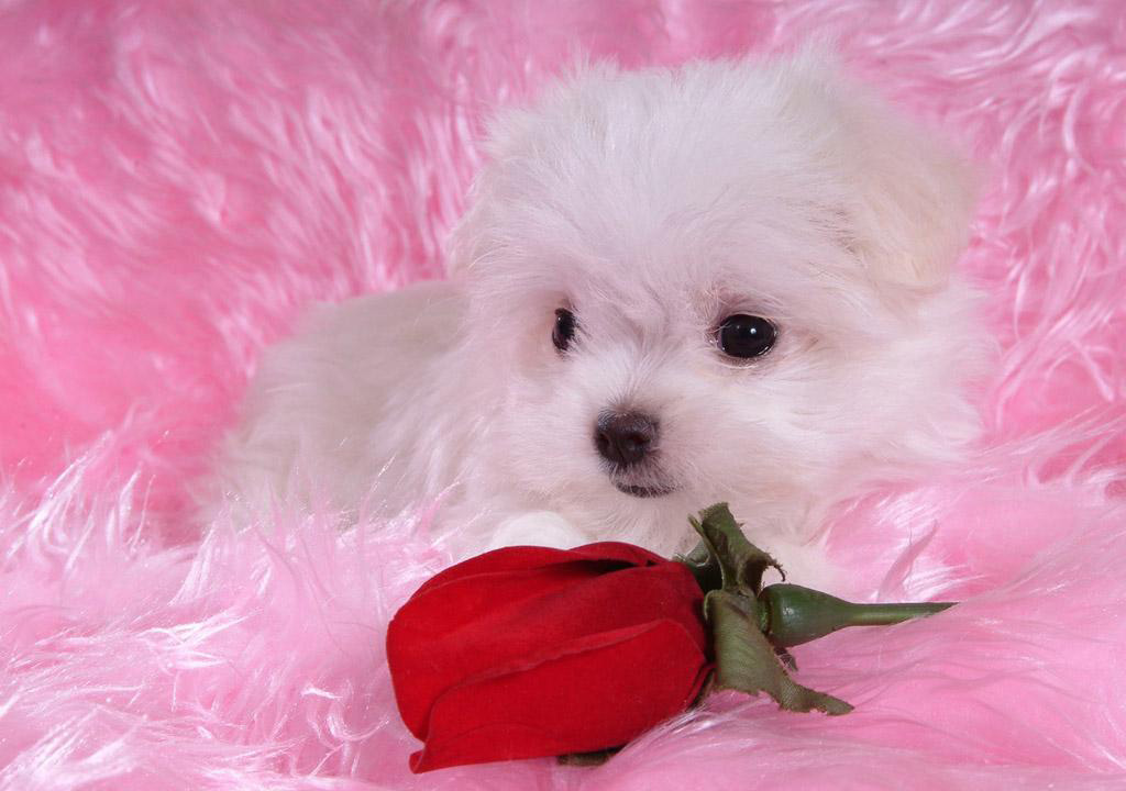 Cute Puppies and Dogs Images - Duul Wallpaper