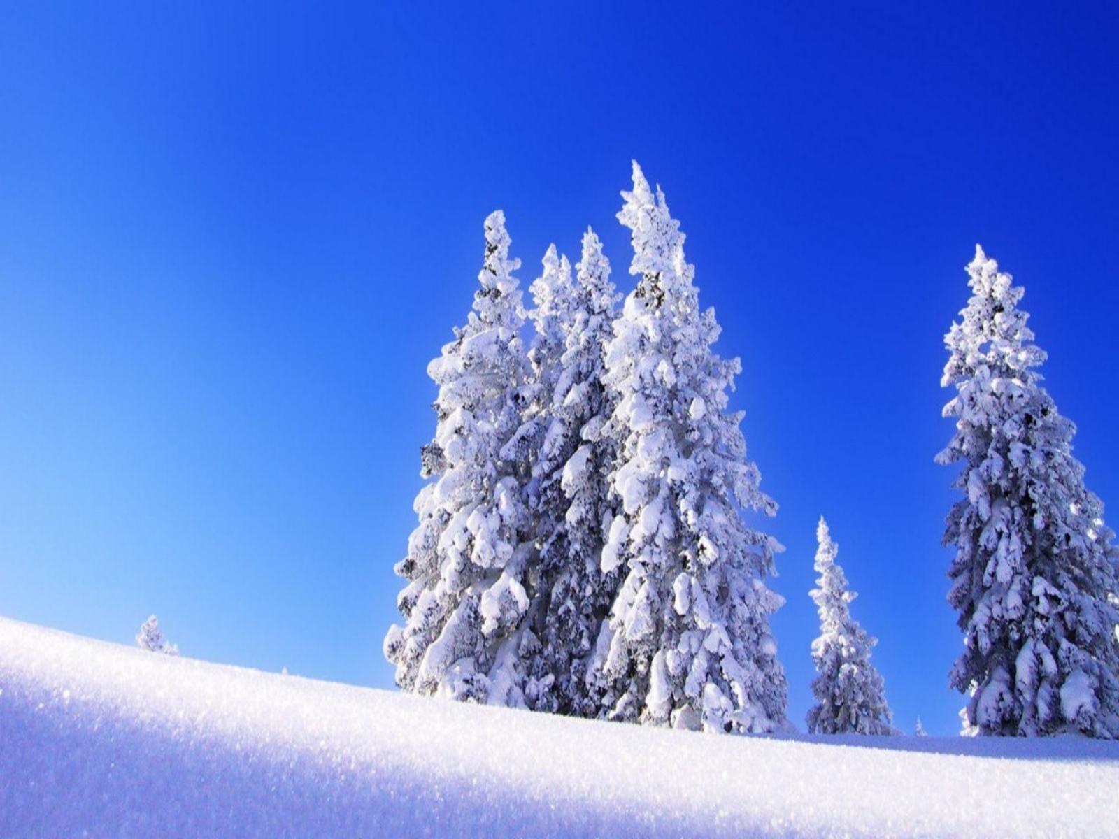 Winter Holiday Wallpaper