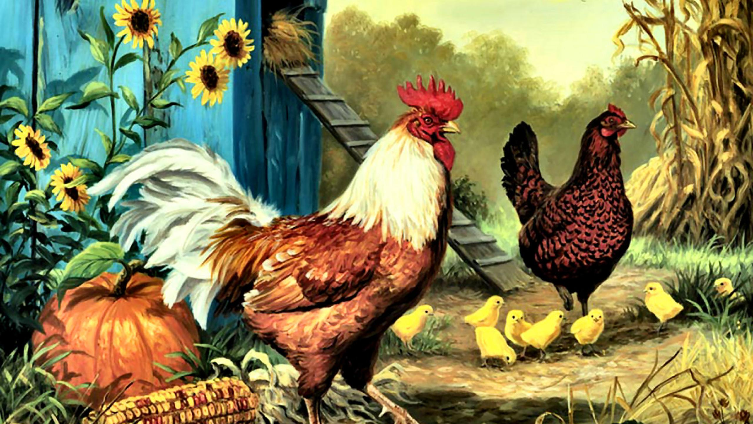 Collection of Rooster Backgrounds Rooster HD Wallpapers 2560x1440