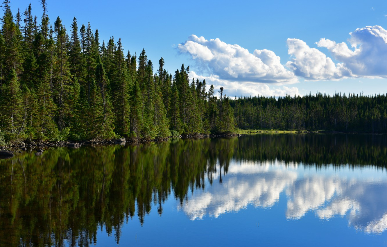 Wallpaper forest lake pond reflection Canada Canada 1332x850