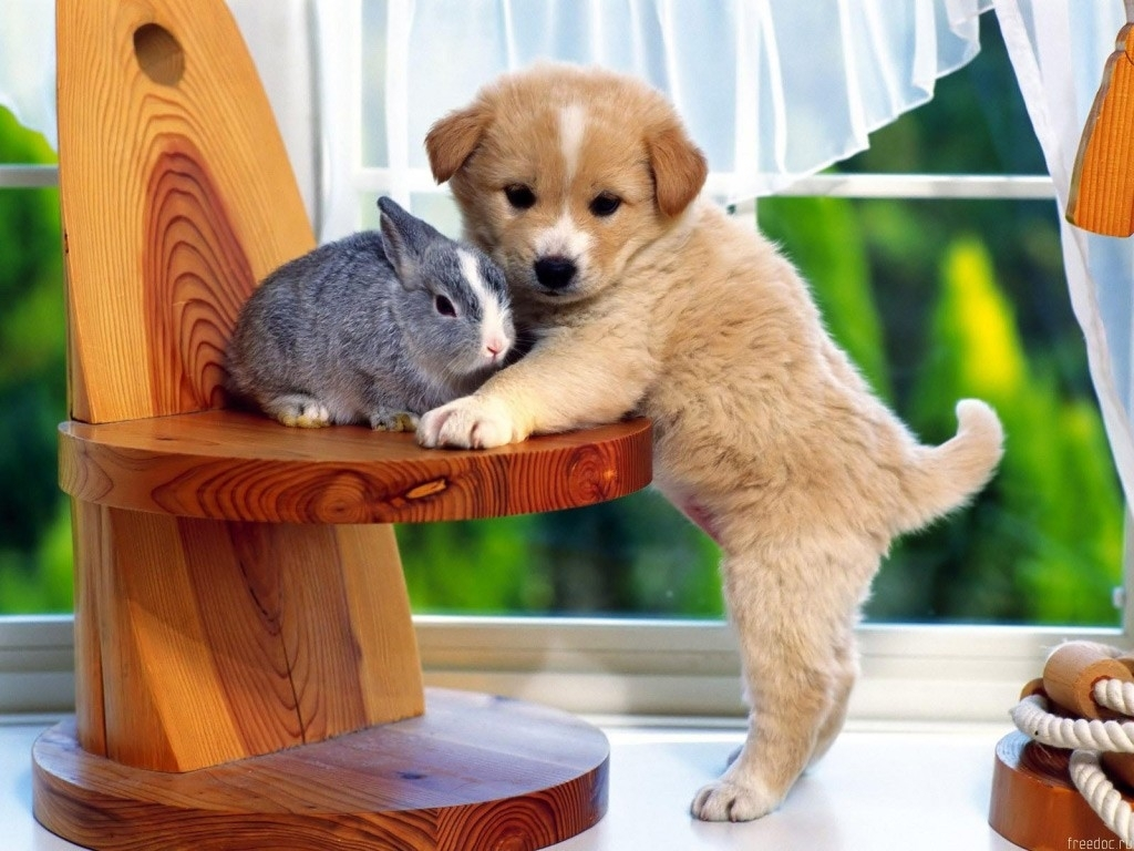 Funny Animals Funny Dogs Wallpaper 1024x768