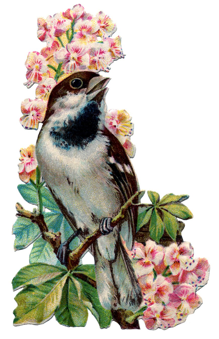 Vintage Graphic   Pretty Bird with Flowers   The Graphics Fairy 871x1350