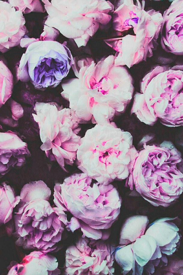iphone wallpaper nature night pink retro rose tumblr vintage 610x915
