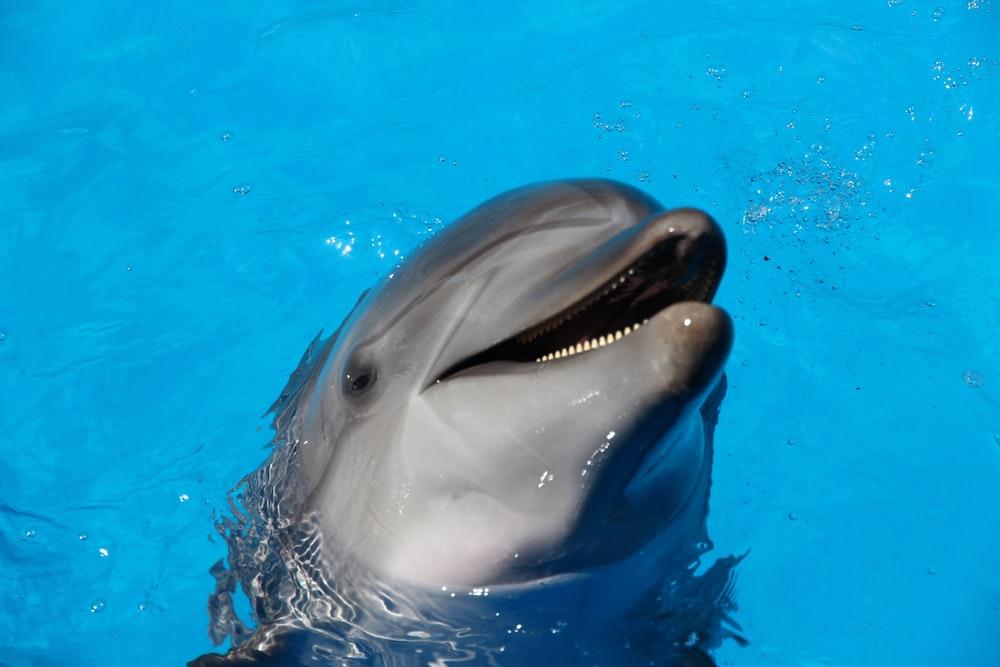 Dolphin Wallpapers HD Download [500 HQ] Unsplash 1000x667