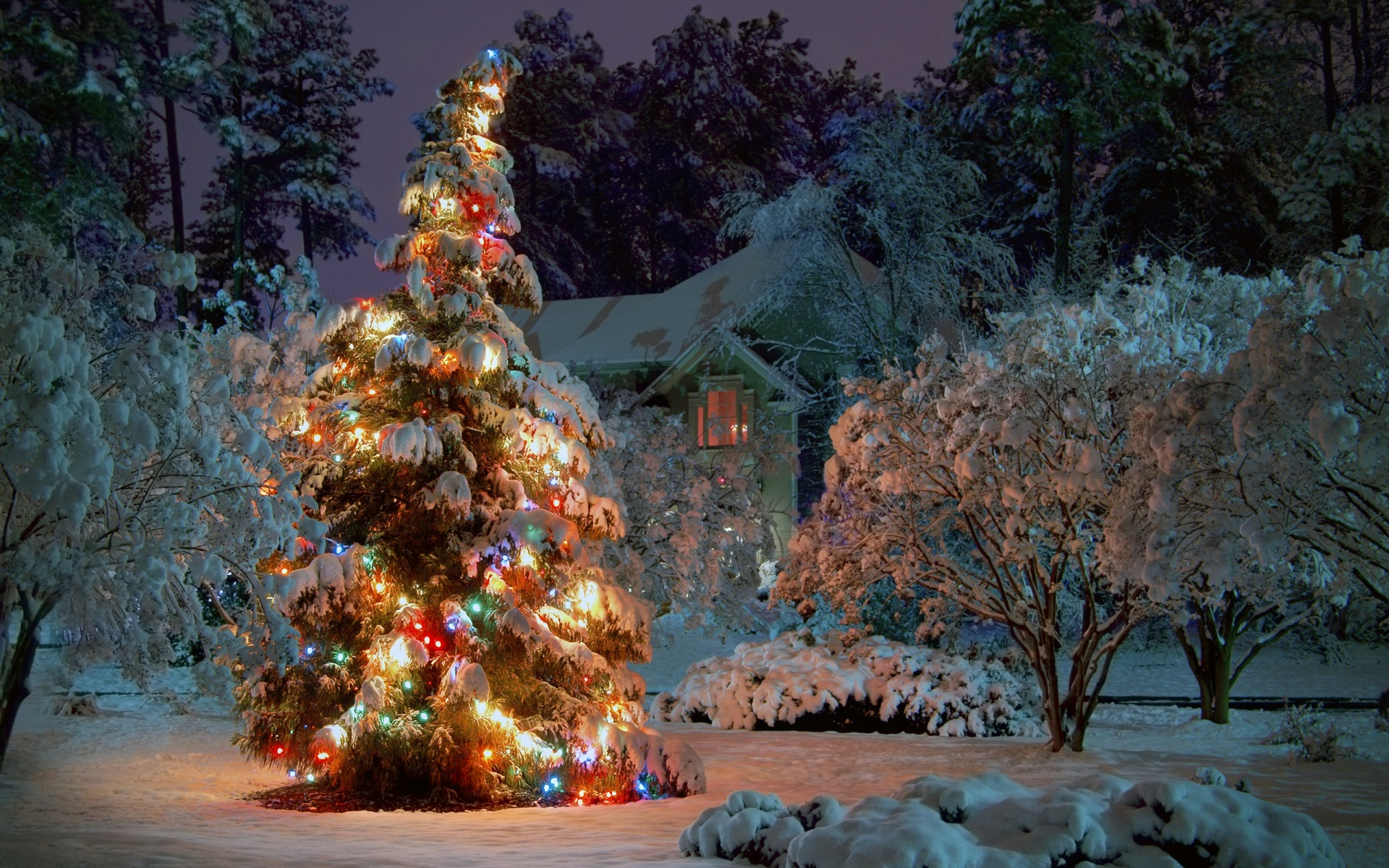 1920x1200 Outdoor Christmas tree desktop PC and Mac wallpaper 1920x1200