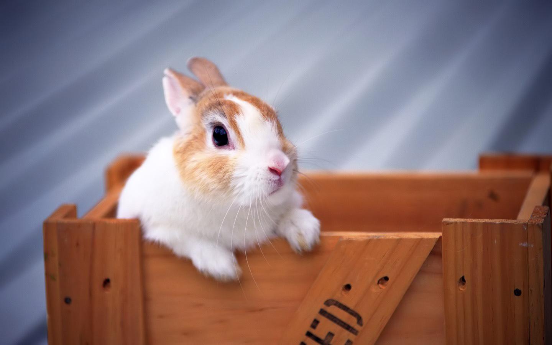 Widescreen HD Wallpaper Holiday Easter Sunday Rabbit High 1440x900