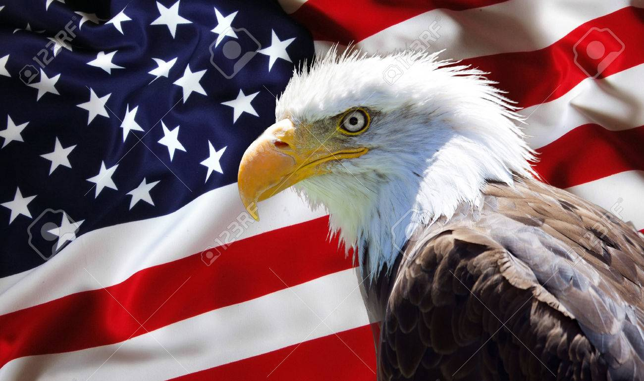 Background Wallpaper   North American Bald Eagle On American 1300x770