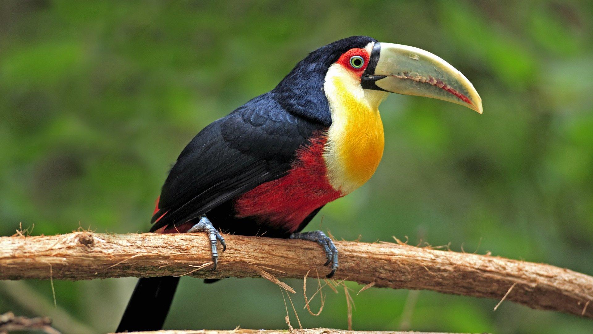 Birds Wallpapers Wallpapersafari