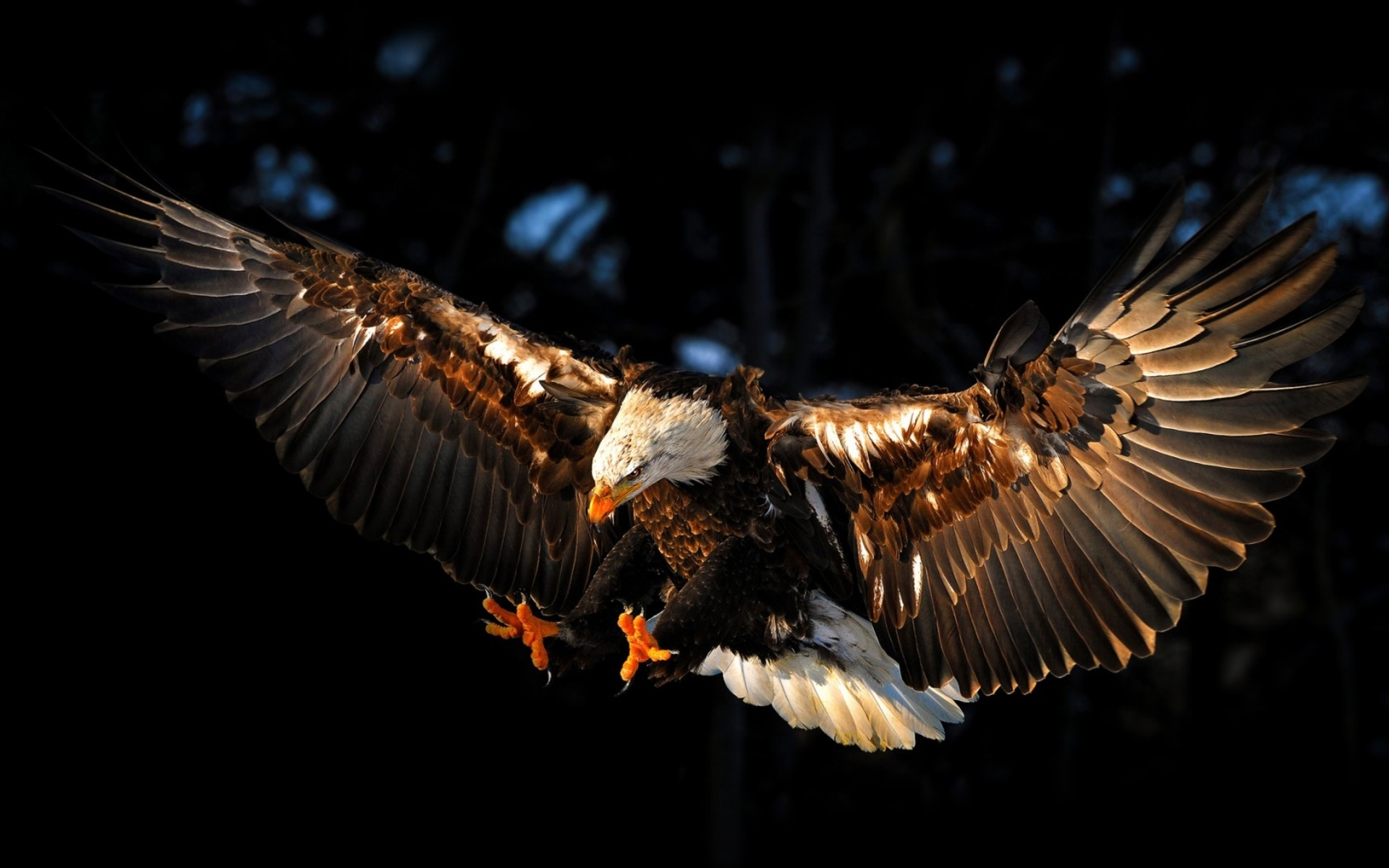 Flying Eagle Wallpaper 1920x1200