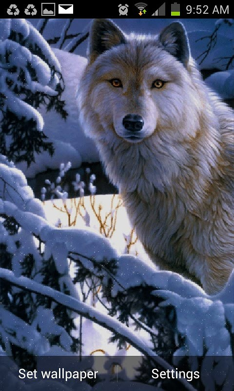 Wolf Wind Live Wallpaper Android Download 480x800