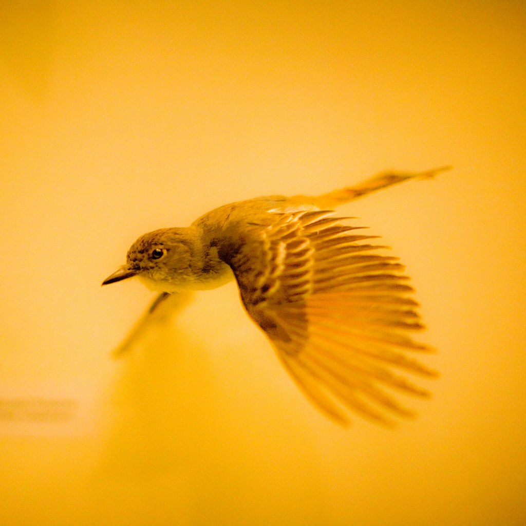 flying bird ipad wallpaper to download 1024x1024