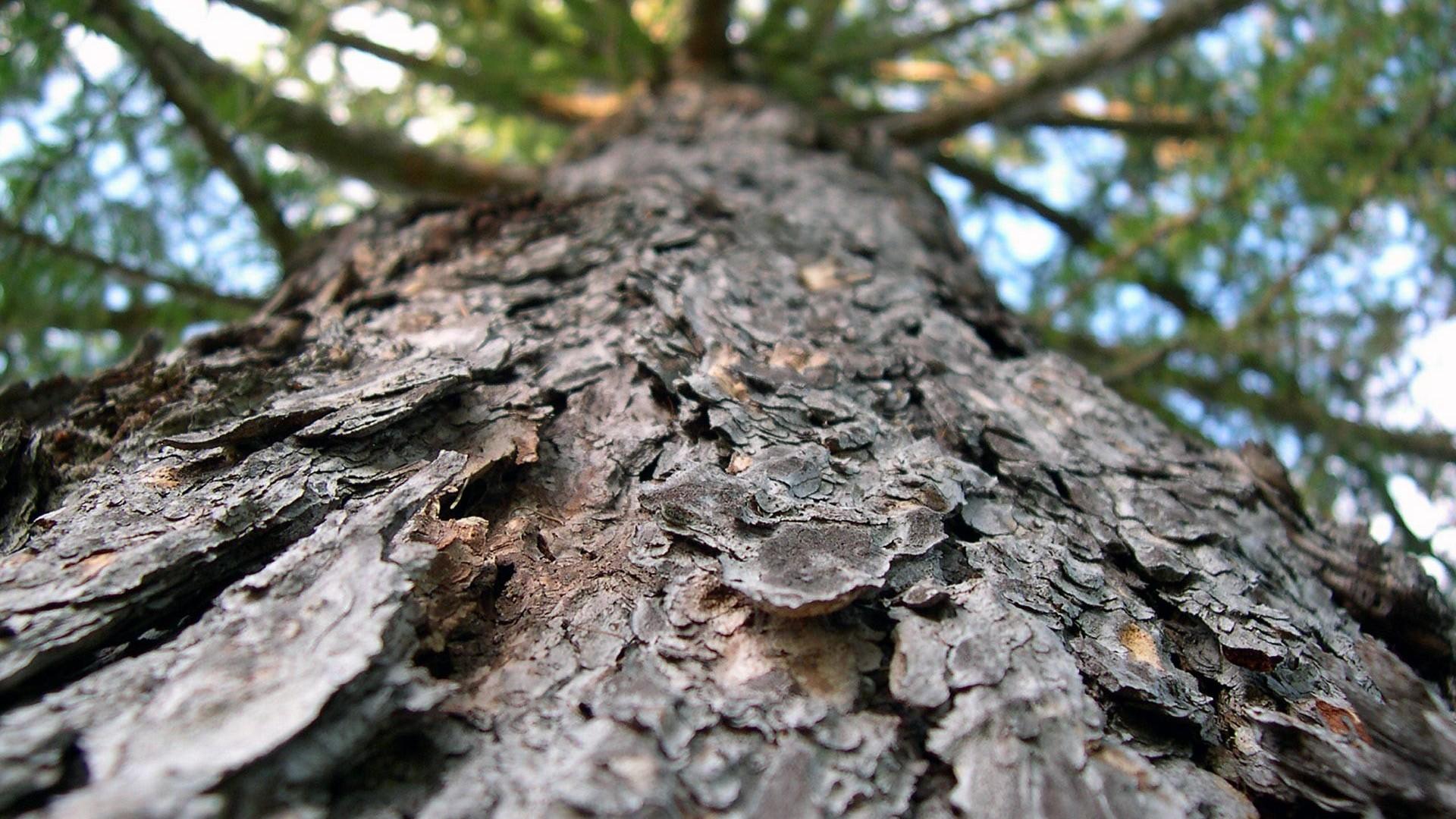 Tree bark wallpaper 6242 1920x1080