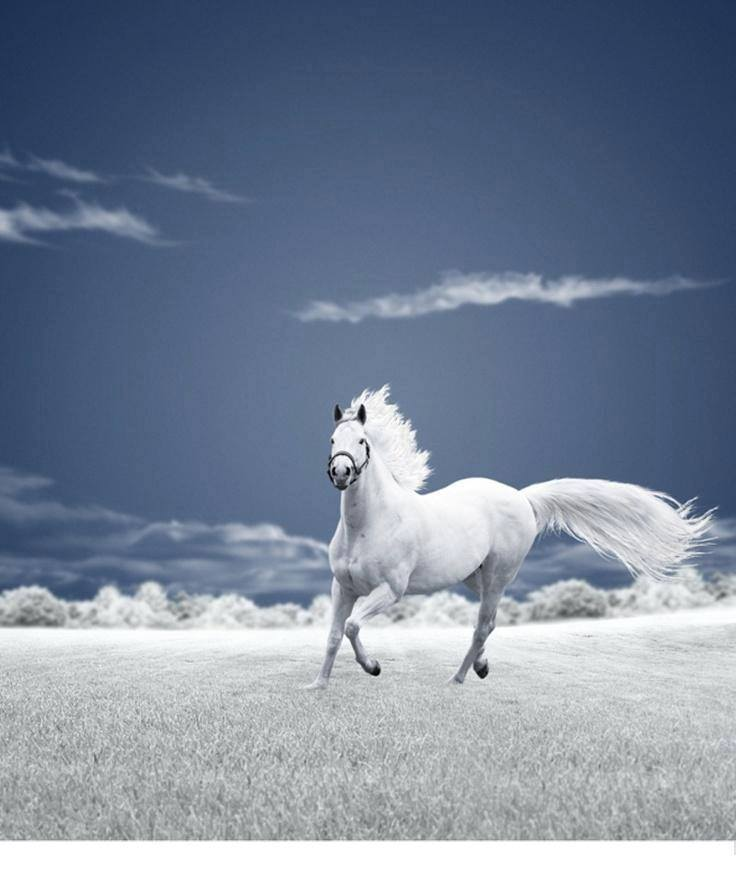You are viewing right now the image Horse Running HD Wallpaper 736x892. Download ...