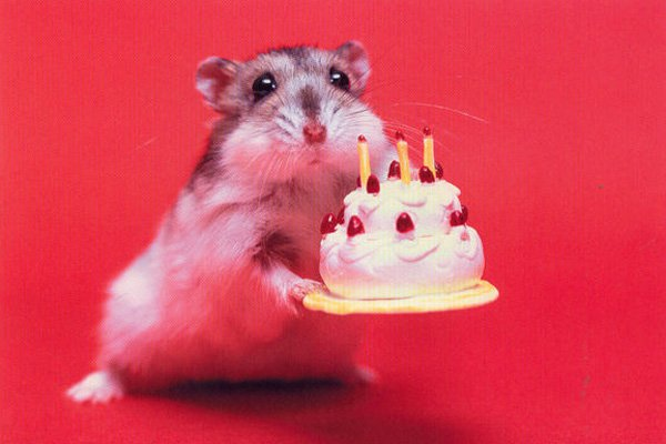 happy birthday animated gif Hd Wallpapers 600x400