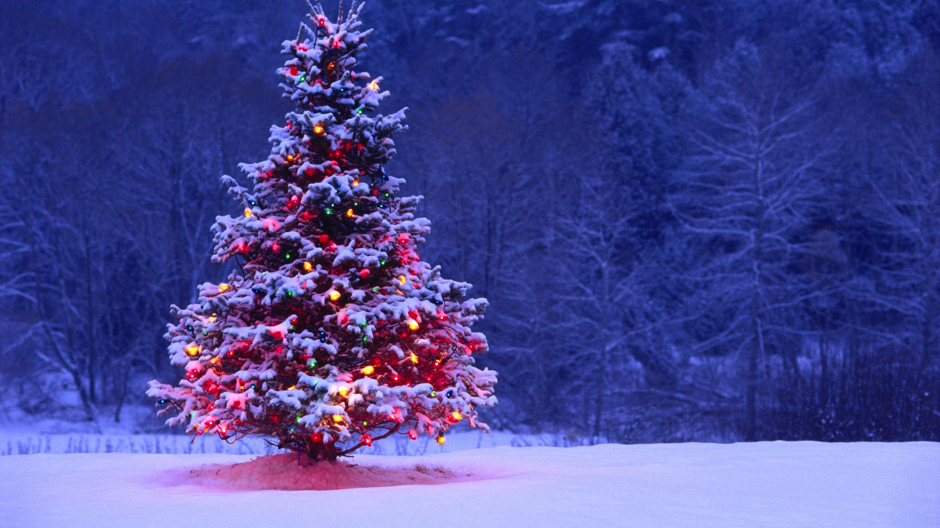 Christmas Tree Desktop Wallpapers Christmas Tree Images 1920x1080