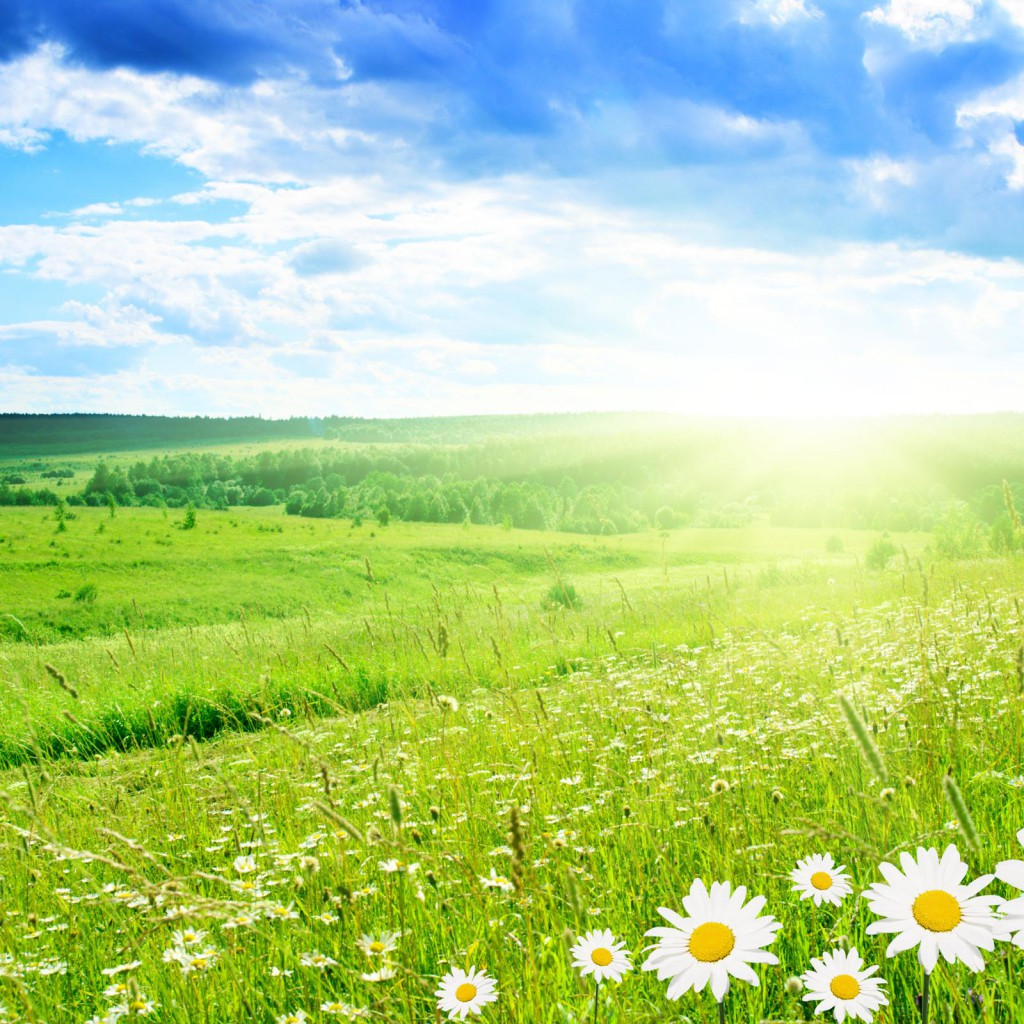 Cool Spring Wallpapers: Free Spring Wallpaper For IPad
