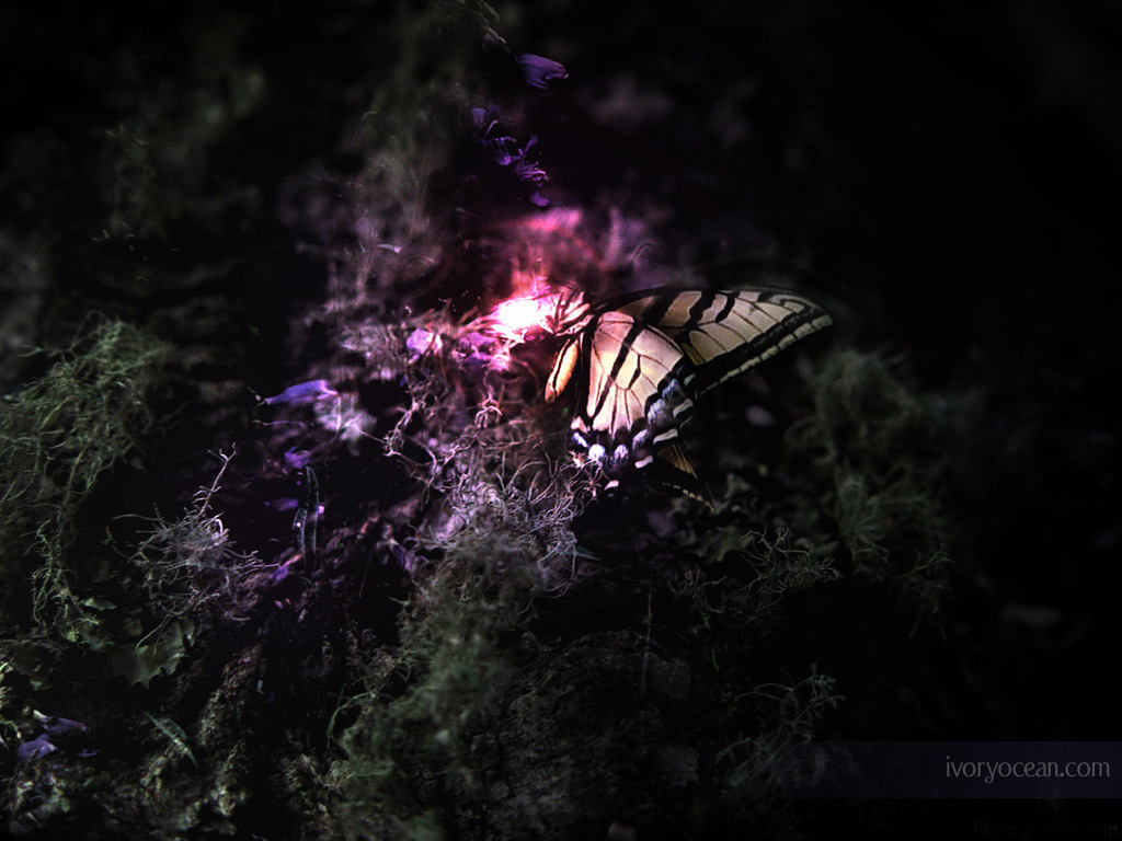Butterfly wallpaper   Butterflies Wallpaper 683920 1024x768