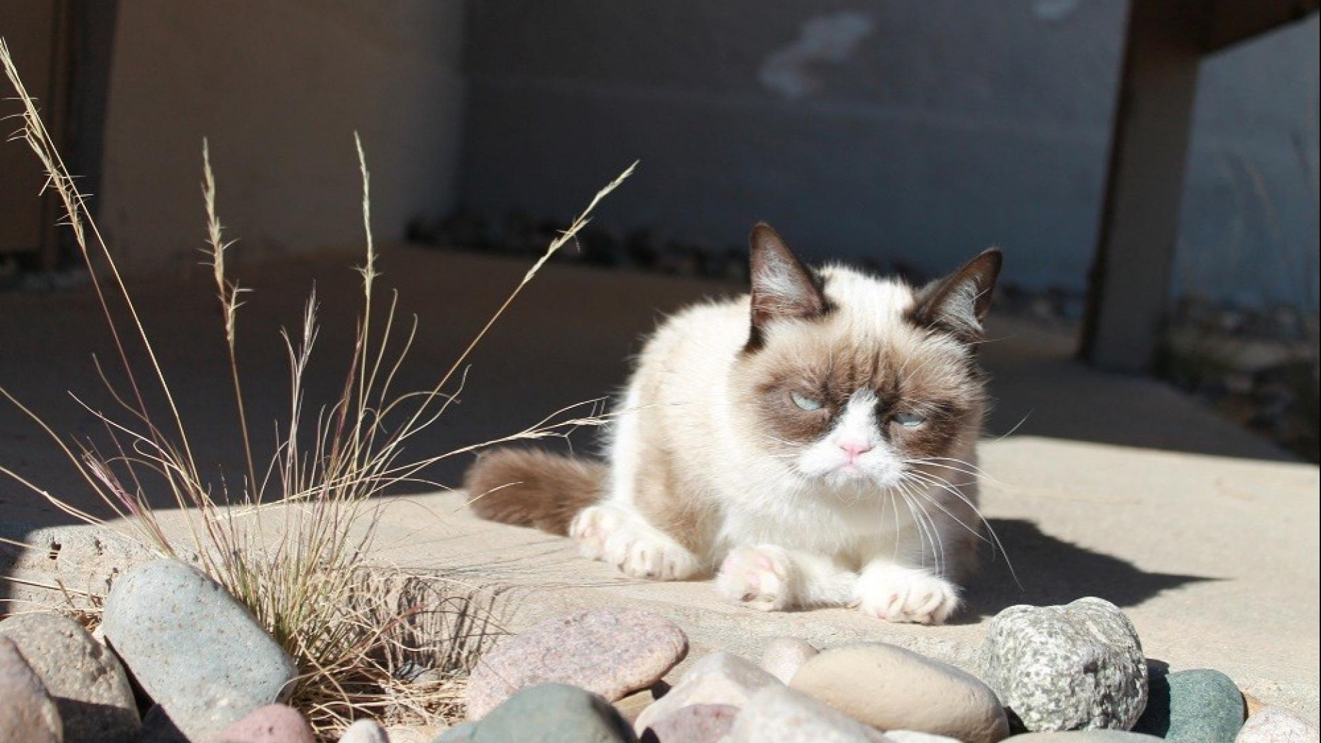 Cats grumpy cat wallpaper 24967 1920x1080