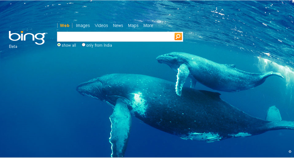 Gallery For Bing 955x515