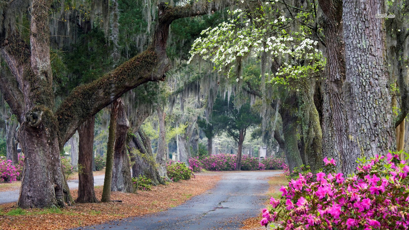 in Savannah Georgia wallpaper 1280x800 Beautiful park in Savannah 1366x768