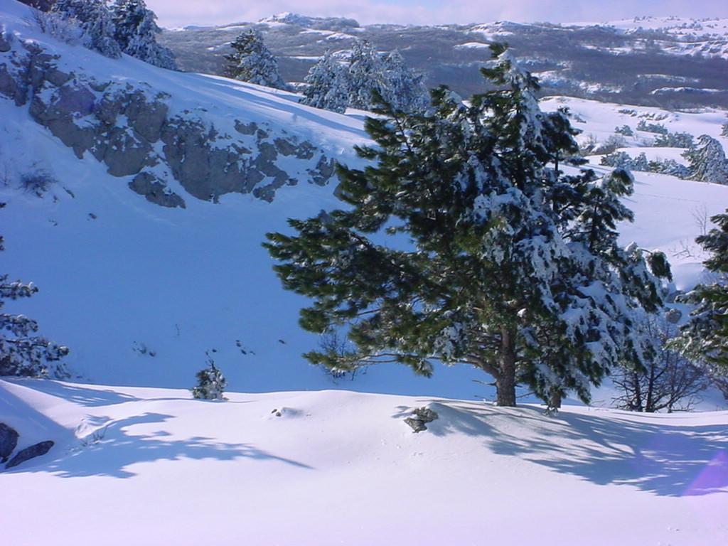 Winter Tree Screensavers wallpaper wallpaper hd background desktop 1024x768