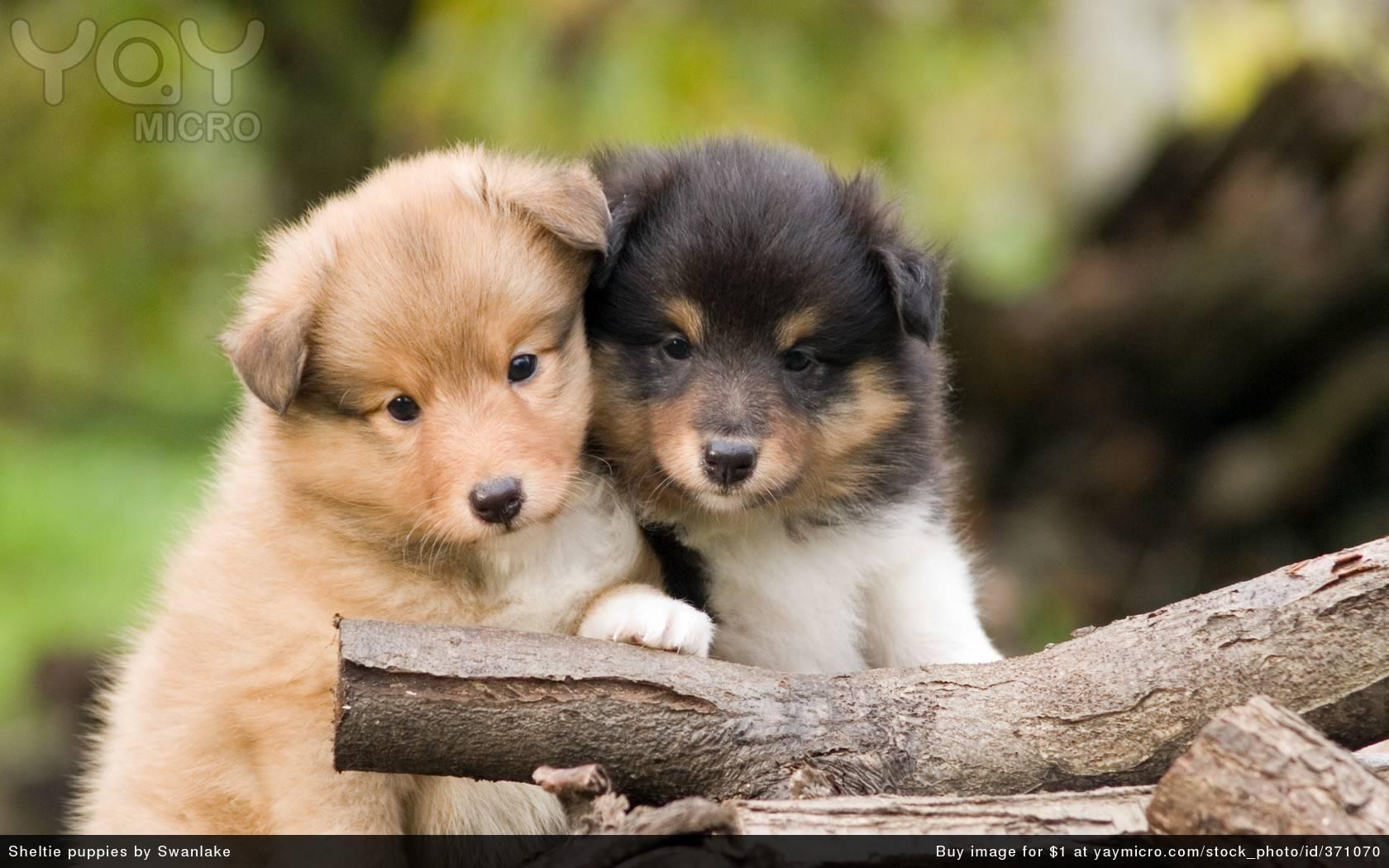Cute Pups Cute Pups wallpaper 1680x1050