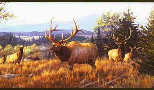 Warner Elk Mountain Wallpaper Border Outdoors with Hautman Brothers 500x293